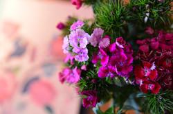 Kwiaty w restauracji