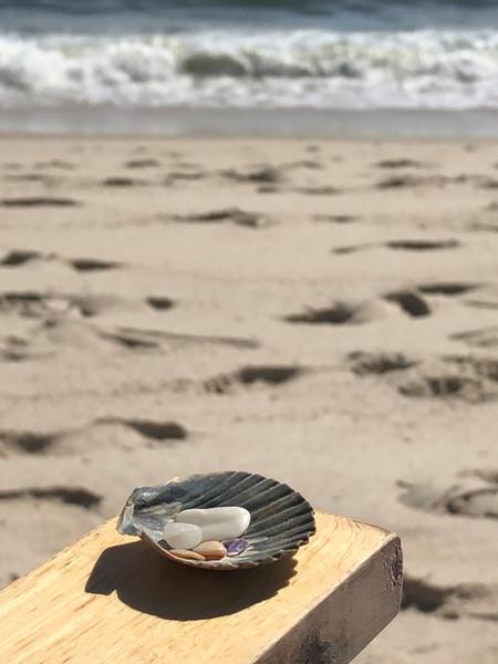 Artistic shell.jpg