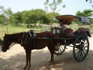 Horse cart with driver Min Min
