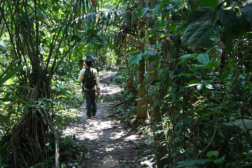 Robin is leading the way on this hike through the jungle