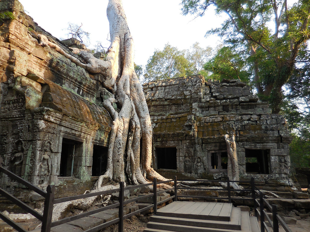 A closer look at this tree and temple ruin that are entwined together