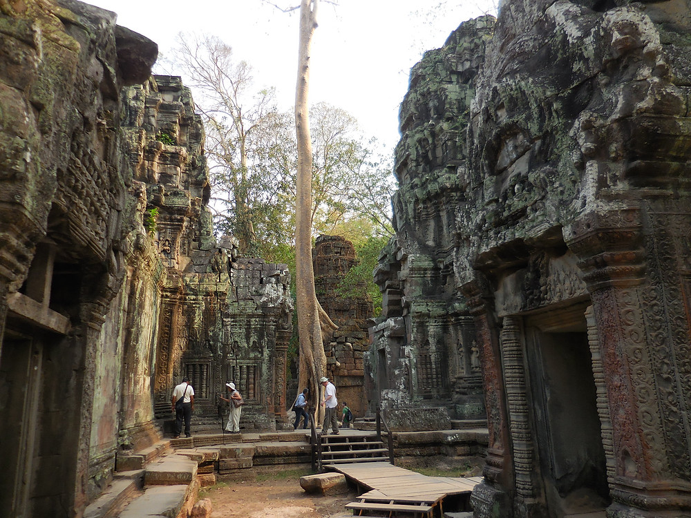 Ta Prohm in the early morning light