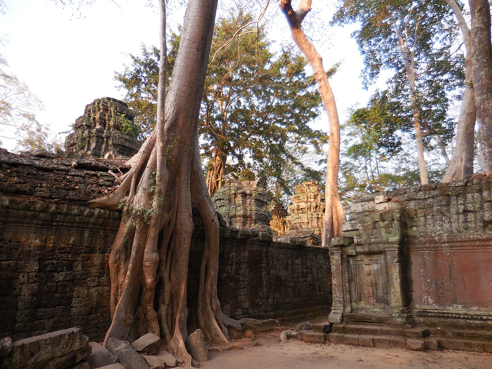 Ta Prohm in the late afternoon sun