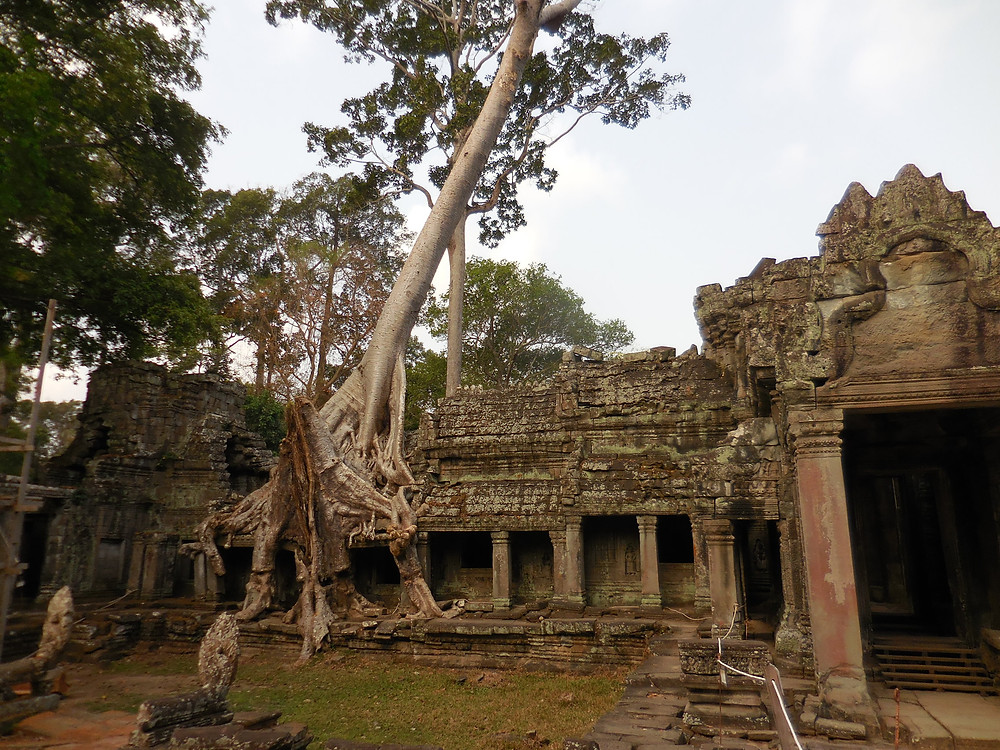 I love this section near the back of Preah Khan where the tree is intertwined with a part of the temple