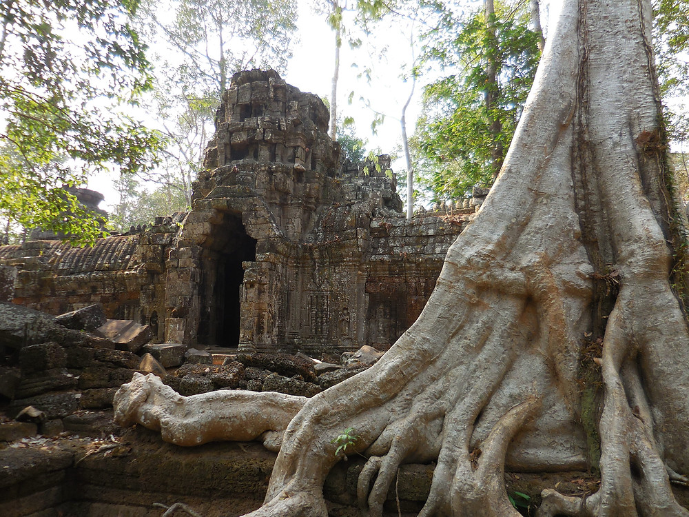 The trees and the ruins at Ta Nei make great photo ops
