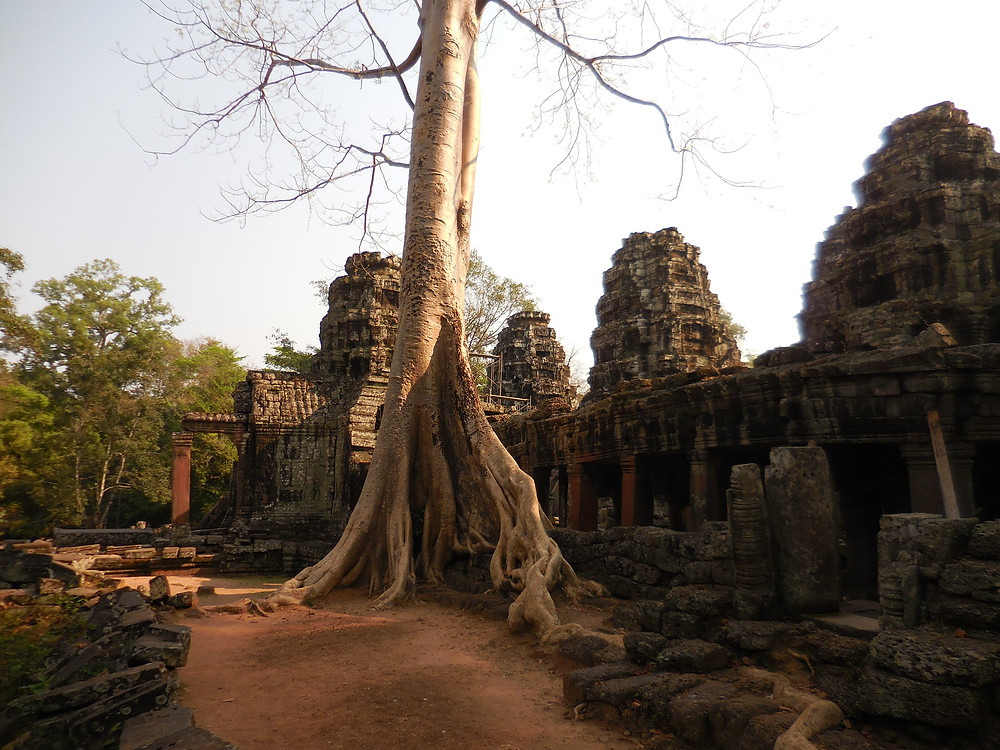I love how the tree and the temple look in the morning sun