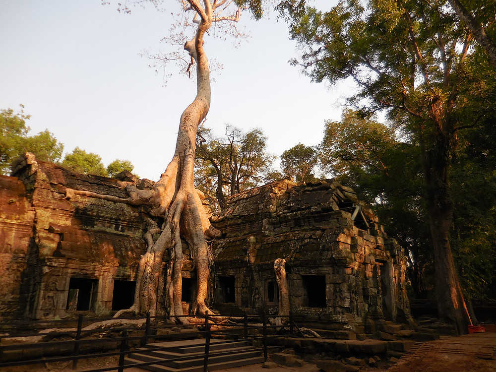 Buildings engulfed by large sponge trees is what Ta Prohm is known for. And the late afternoon is a great time to photograph this west facing building.