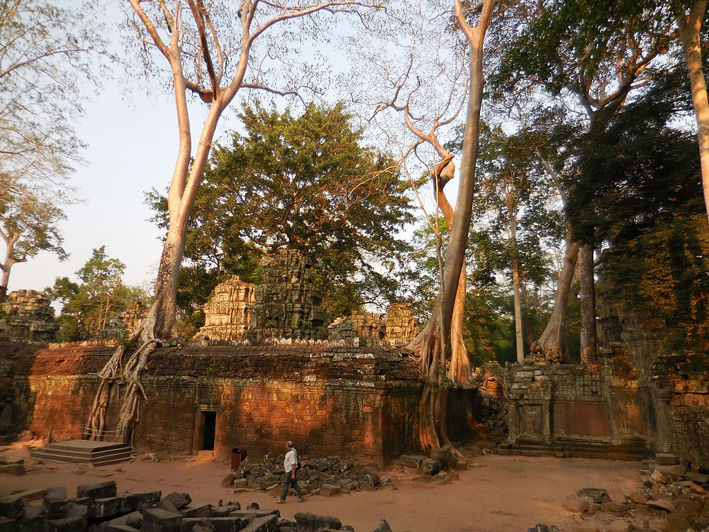 A solo traveler walks through Ta Prohm late in the day