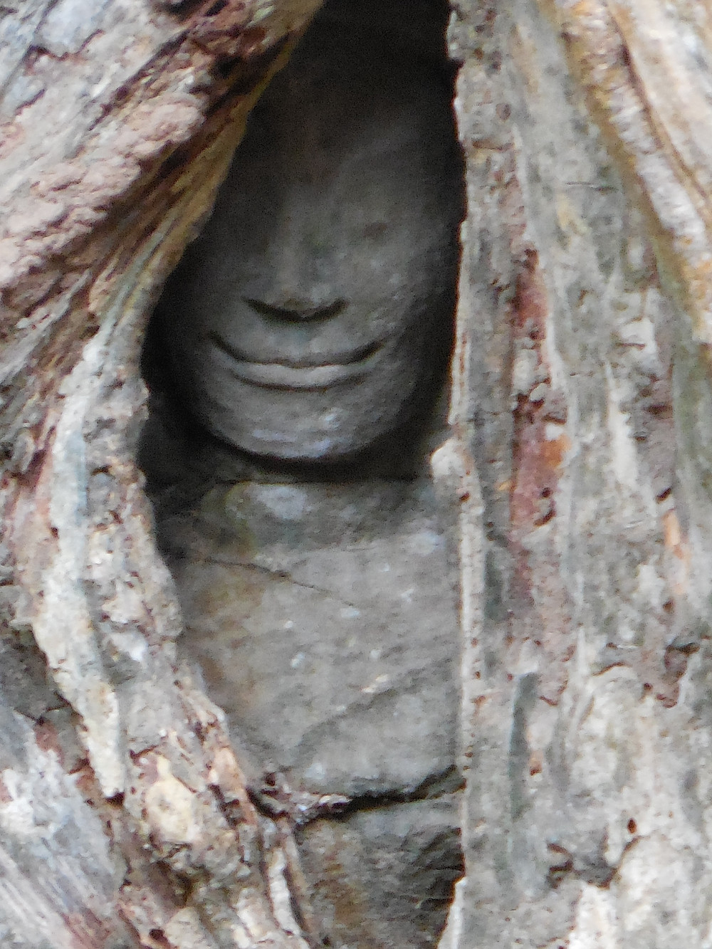 A close-up of the stone face peeking through the hole in the tree