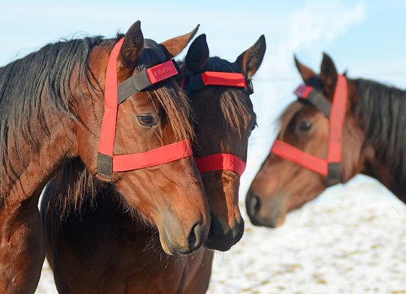 Prova på för tre hästar