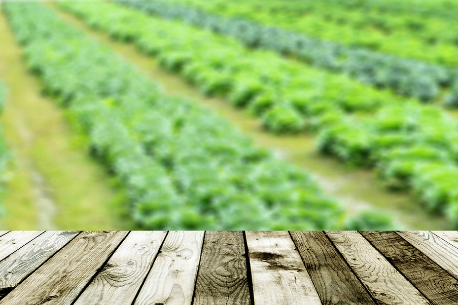 blurred background of Vegetable garden a