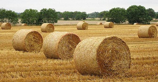 round-straw-bales-sussex-w640h480.jpg