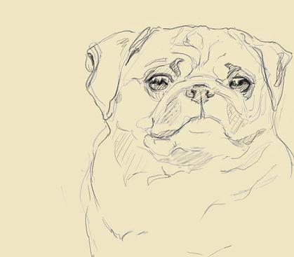Pug Sketch