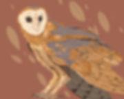 owl-color.jpg