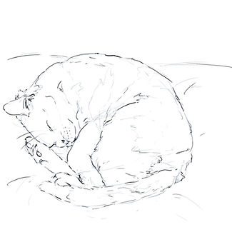 Cat Sleeping Sketch