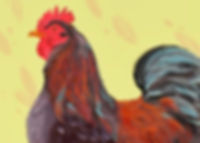 rooster illutration