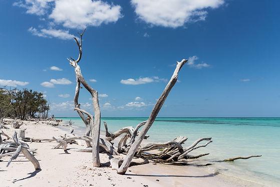Driftwood on beach.jpg