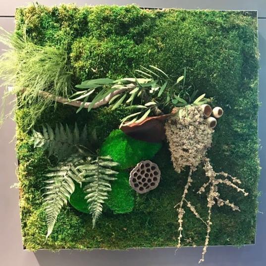Yosun Tablo ve Mumyalanmış Bitki