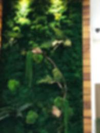 Yosun Bitki Duvar.jpg