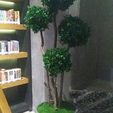 Stabilize Ağaç