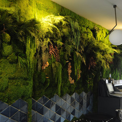 Azur Mumyalanmış Bitki Duvarı-min.JPG