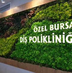 yosunduvar_lichen.jpg