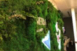 yosun duvar uygulama