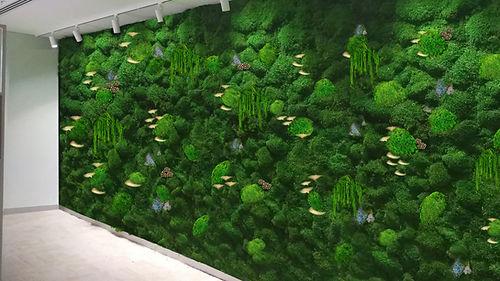 kara yosunu dikey duvar