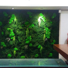 Yosun Duvarı ve Mumyalanmış Bitki