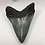 "Thumbnail: 2.63"" Beautiful Fossil Shark Tooth"