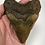 "Thumbnail: 4.52"" Calico Fossil Megalodon Shark Tooth"