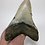 "Thumbnail: 4.85"" Fossil Megalodon Shark Tooth"