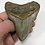 "Thumbnail: 3.69"" Fossil Megalodon Shark Tooth"