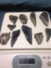Fragment Megalodon Shark Teeth
