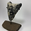 "Thumbnail: 5.45"" Uncleaned Fossil Megalodon Shark Tooth  **Inverted on Whale Bone"