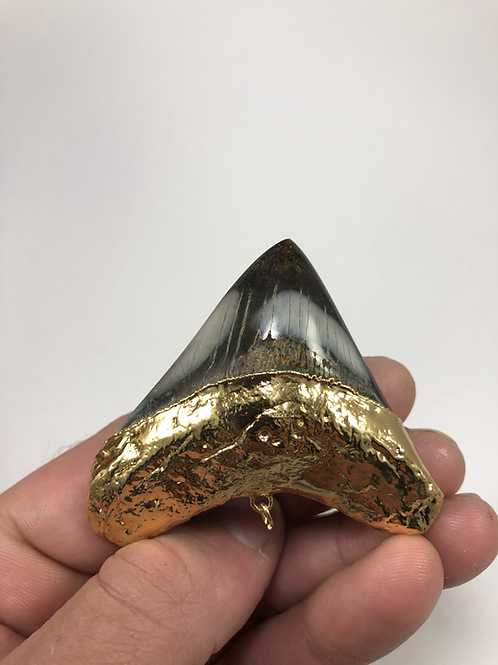 """2.52"""" 18K Gold Plated Diamond Polished Fossil Megalodon Shark Tooth"""