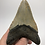 "Thumbnail: 4.58"" Lower Fossil Megalodon Shark Tooth"