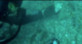 Scuba Diving for Megalodon Shark Teeth
