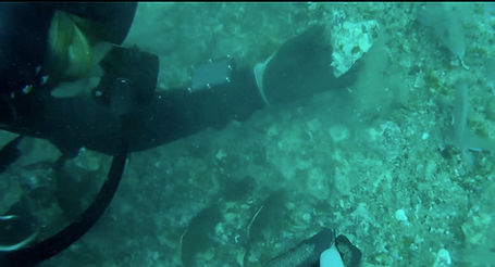 Scuba Diving for Megalodon Shark Teeth