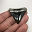 """Thumbnail: 2.02"""" Diamond Polished Silver Plated Fossil Megalodon Shark Tooth Neckla"""