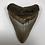 "Thumbnail: 4.19"" Sharp Fossil Megalodon Shark Tooth"