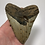 "Thumbnail: 5.64"" Principal Upper Fossil Megalodon Shark Tooth"