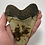 """Thumbnail: 5.69"""" Speckled Fossil Megalodon Shark Tooth"""