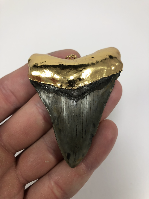 """3.02"""" 18K Gold Plated Fossil Megalodon Shark Tooth"""