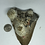 """Thumbnail: 4.90"""" Uncleaned Fossil Megalodon Shark Tooth"""