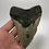 "Thumbnail: 4.88"" Fossil Megalodon Shark Tooth"