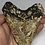 """Thumbnail: 5.29"""" Uncleaned Fossil Megalodon Shark Tooth"""