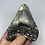 """Thumbnail: 4.08"""" Uncleaned Fossil Megalodon Shark Tooth"""