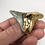"""Thumbnail: 2.44"""" 18K Gold Plated Fossil Megalodon Shark Tooth"""
