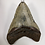 """Thumbnail: 4.37"""" Speckled Fossil Megalodon Shark Tooth"""